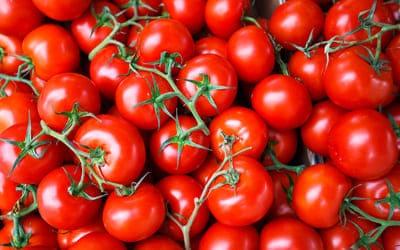 Основные переработчики фруктов и овощей